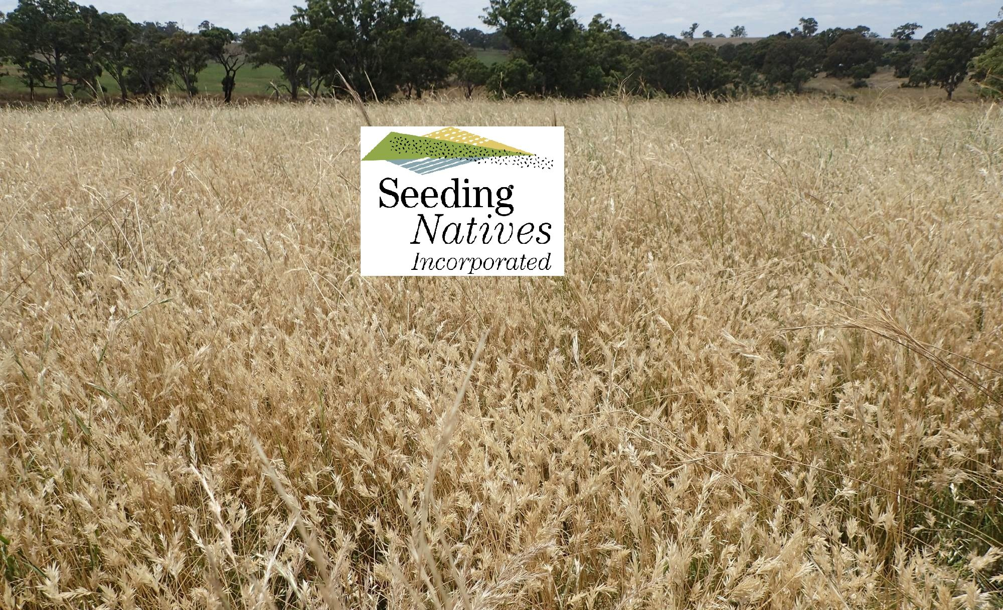A not for profit business specialising in direct seeding and the ecological restoration of native grasslands and associated ecosystems